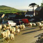 イギリスウェールズのホテルやユースホステル情報とWifi環境