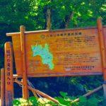 世界自然遺産白神山地!日本の滝100選くろくまの滝や十二湖を巡る