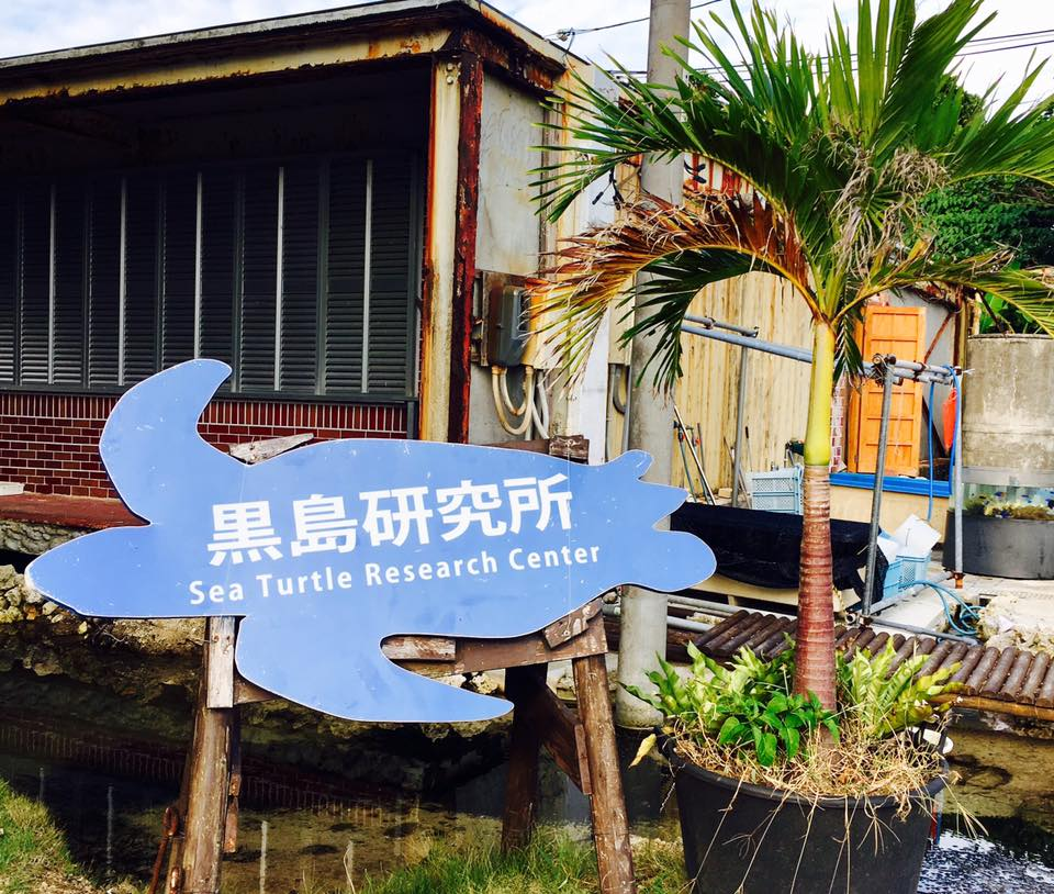 沖縄のハートアイランドの黒島研究所でウミガメに出会う