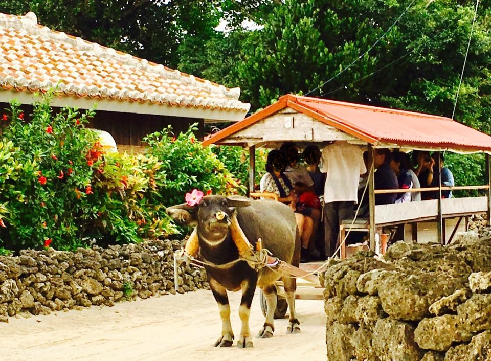沖縄竹富島で水牛車に乗ったり星砂の浜やコンドイビーチへ行こう