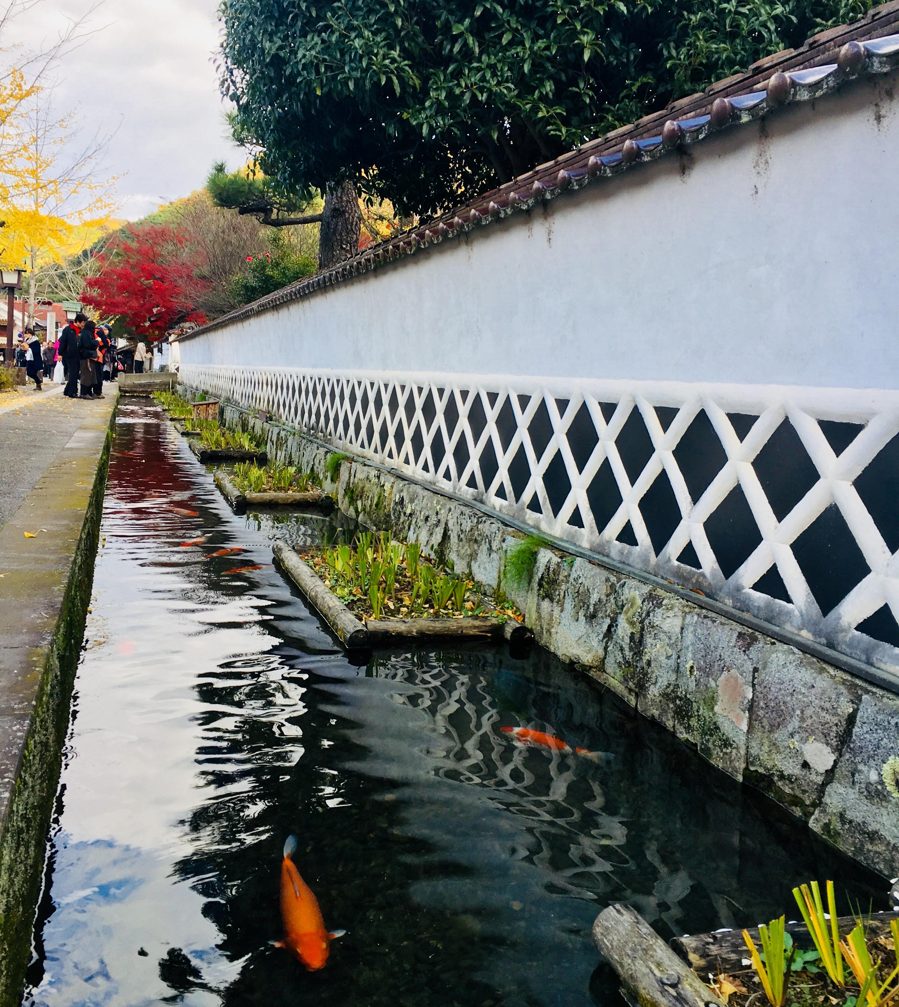 津和野伝統的建物群保存地区!殿町通り水路の鯉とカトリック教会の歴史
