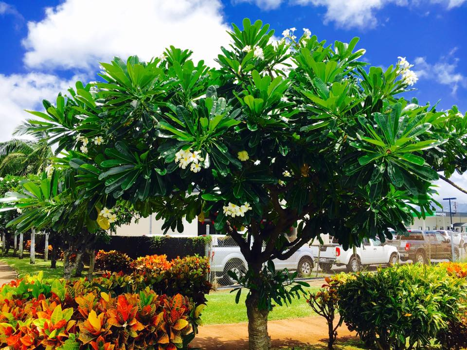 ハワイ州ラナイ島のケアヒアカウェロを巡りフォーシーズンズに宿泊