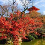 朝6時から清水寺見学!嵐山はレンタサイクル利用し夜は納涼床で楽しむ