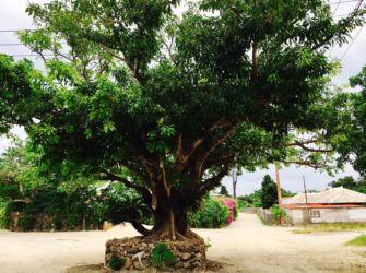 竹富島の西集落