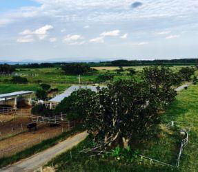 黒島展望台からの景色