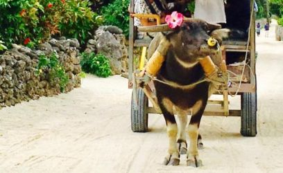 新田観光の水牛車
