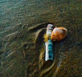 ロッシリビーチの小さな生き物