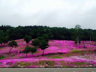 滝の上芝桜