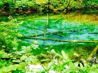 透明度の高い神の小池