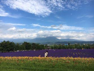 ファーム富田と十勝岳連峰