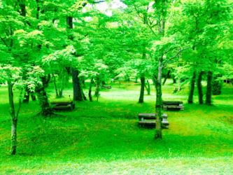 支笏湖湖畔の公園