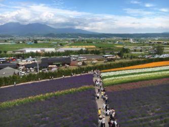 中富良野町のファーム富田