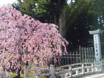 金剛峰寺の桜