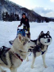 雪三舞の犬ぞり