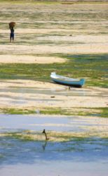 海藻を運ぶ人